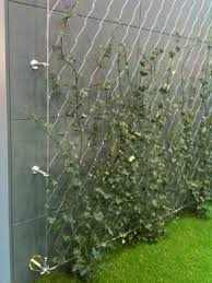 tension wire trellis what sailor wouldn t love this be to modern