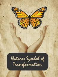 funeral butterflies live butterfly releases for funerals and monarch butterfly release symbol of tranformation
