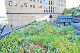 Small Picture INTERVIEW Walking the High Line with its garden designer Piet