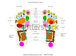 Foot Reflexology Chart Main Point Be Stock Vector Royalty