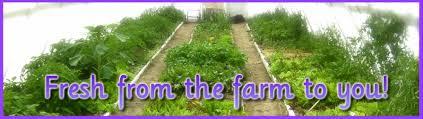 Lesa Smith's Farm Fresh Greens! - Lesa Smith Farms in Estancia, New Mexico  - No GMO, All Local, All Good!