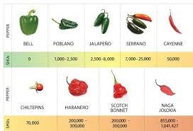 chili peppers. Contemporary Peppers In 1912 Chemist Wilbur Scoville Invented The Scale Measured In  Heat Units Or SHUs Still Used To Indicate A Chiliu0027s Heat Intended Chili Peppers