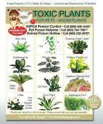 non toxic indoor plants cute house plants safe for cats me poisonous house plants to cats