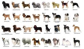 Small Dog Breeds Chart Clipart Images Gallery For Free