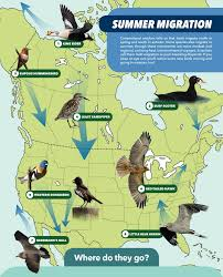 Bird Migration Patterns