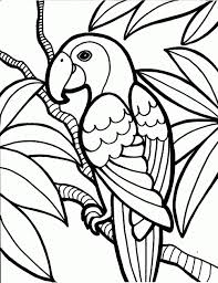 Parrot Birds Coloring Page free printable parrot coloring pages for kids on bird printable coloring sheet