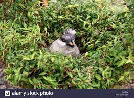 English Ivy Bird High Resolution Stock Photography and Images - Alamy