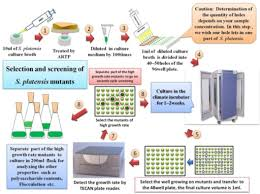 The Experimental Protocol For High Throughput Screening Open I