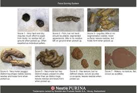 Fecal Scoring Chart Body Constitution An Overview Sciencedirect Topics