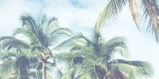 Palm trees tumblr header Blog Tumblr Header Palm Trees And Summer Image We Heart It Image About Tumblr In Lets Escape By Martine Thoresen