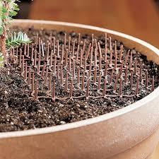 cat repellent for garden. Cat Scat Mats For Houseplants And Gardens Repellent Garden E