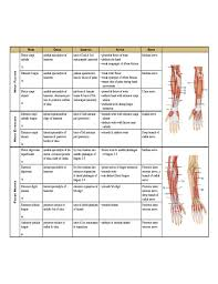 Muscle Action Chart Complete Muscle Chart Free Download