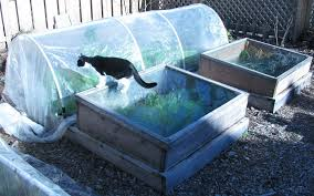 Small Picture Winter Vegetable Garden Are You Planning For One This Winter