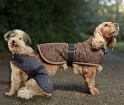 5 Winter Warmers for Dogs | Keeping Your Dog Warm & Worcester Quilted Dog Coat Adamdwight.com