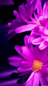 Flower Wallpaper Galaxy S4 ~ DONNA145
