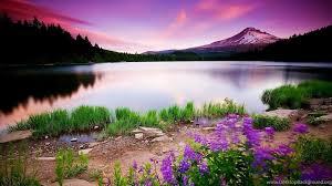 wallpaper hd 1080p 3d nature. Nature Wallpaper Hd Free HD Widescreen Wallpapers Desktop Background Inside