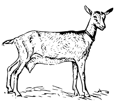 Small Picture Free Goat Coloring Pages Clipart 1 page of Public Domain Clip Art