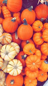 Fall Pumpkin wallpaper