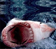 shark wallpaper 3d. Modren Shark New Custom Beautiful 3D Shark Open Mouth Ultrahighdefinition Mural 3d  Wallpaper  With Shark Wallpaper