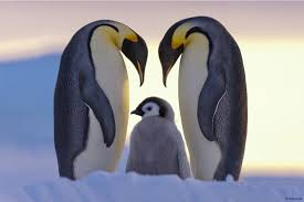 cute penguins in love. Delighful Love 15 Cute Penguin Photographs With Penguins In Love E