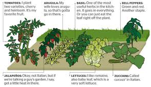 Small Picture Lovable Perfect Vegetable Garden Layout How To Plan A Vegetable