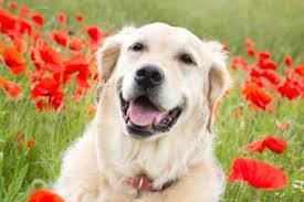 Ποιοι είναι οι συνήθεις όγκοι στο σκύλο;