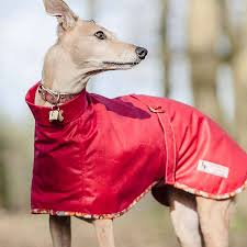 bright red whippet roll neck dog coat