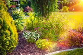 tips for drought tolerant gardening