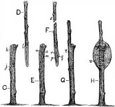 How To Graft A Fruit Cocktail TreeHow To Graft Fruit Trees With Pictures
