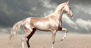 most beautiful horse breed in the world. Inside Most Beautiful Horse Breed In The World