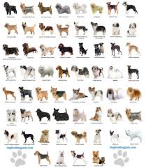 A Chart Of Dogs Dog Chart Dogs Breeds Some Facts About Dogs