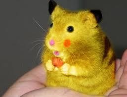 real life pikachu rat 2