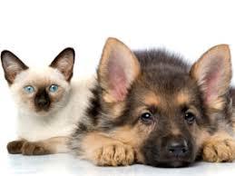 Resultado de imagen de las fotos de gatos y perros