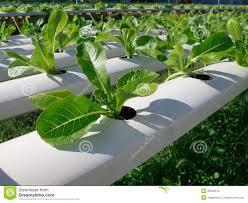 Hydroponic Kitchen Garden Hydroponic Vegetable Garden Ihidrousacom Blog News Nutritional
