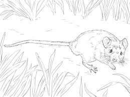 Small Picture House Mouse coloring page Free Printable Coloring Pages