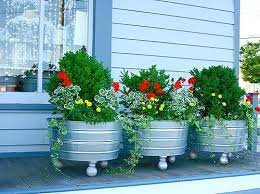 plants container gardening