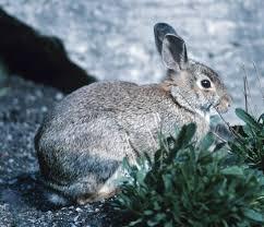 Resume Rabbit Publishing Research Papers In Academic Journals Understanding 66