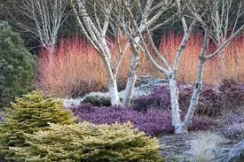 Garden Design Norfolk Impressive Decorating