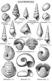 Il Fossils Fossils Seashell Tattoos Geology