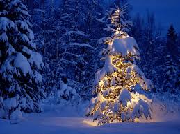 christmas trees decorated outside snow. Fine Decorated The Most Beautiful Sight Ever Seen And Since To Remember That Night  Everyone Prepares A Glittering Tree In Every Home So Nobody Might Get Lost  With Christmas Trees Decorated Outside Snow T