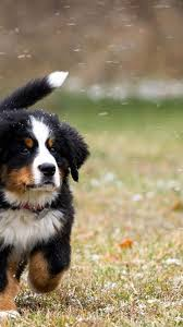 Puppy Android Dog Wallpaper - Pets Lovers