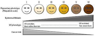 Skin Tone Chart With Names Olive Skin Wikipedia