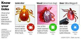 Lone star tick showing up in Wisconsin   Health/Fitness ...
