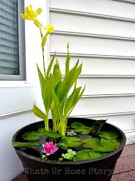 mini water gardens on your deck