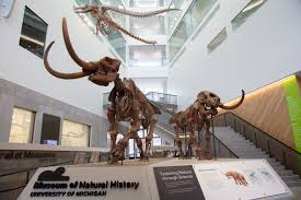 Designs By Nature Laingsburg Mi U M Museum Of Natural History Opens Next Phase With Major