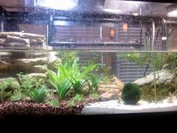Turtle Tank Decor My New Planted Turtle Tank With Co2 Aquarium Advice Aquarium