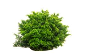you can turn into a bush in fortnite battle royale now and it s as stupid as it is incredible pc gamer