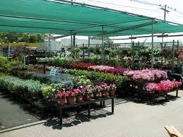 garden store morristown nj. morristown agway nursery garden store nj d