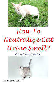 how to get cat urine smell out of couch how to get cat out of carpet cat urine color unique cat spraying on furniture cat urine smell on leather sofa