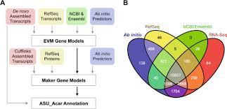 Venn Diagram Bioinformatics A Diagram Of The Bioinformatic Pipeline For The A Carolinensis